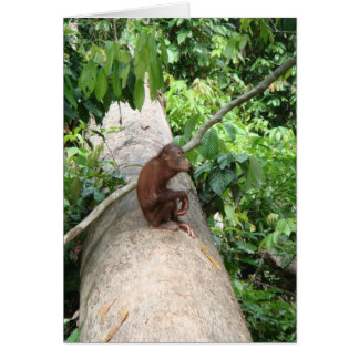Orangutan Forgets Card