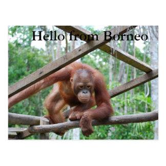 Orangutan Handyman Borneo Postcard