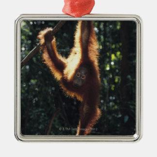 Orangutan Hanging on Liana 2 Christmas Ornament