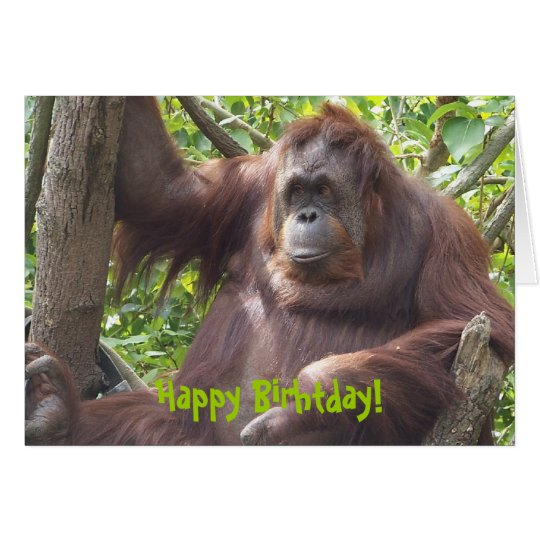 Orangutan Happy Birhtday! Card