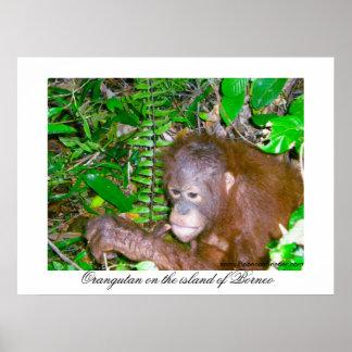 Orangutan in Rainforest Habitat Print
