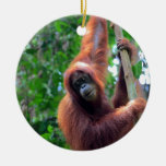 Orangutan in rainforest jungle Sumatra Christmas Tree Ornament