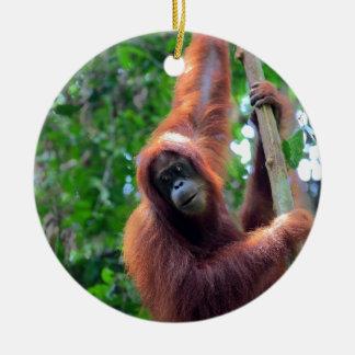 Orangutan in rainforest jungle Sumatra Round Ceramic Decoration