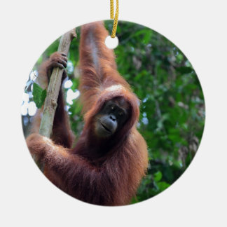 Orangutan in Sumatra rainforest Round Ceramic Decoration