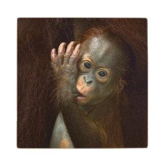 Orangutan Maple Wood Coaster