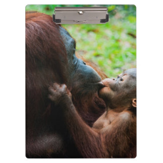 Orangutan mother and baby clipboard