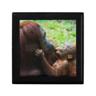 Orangutan mother and baby gift box