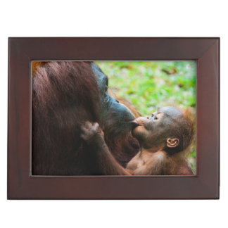 Orangutan mother and baby keepsake box