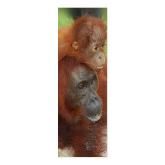 Orangutan  Mother and Baby Photo Pack Of Skinny Business Cards