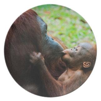 Orangutan mother and baby plate