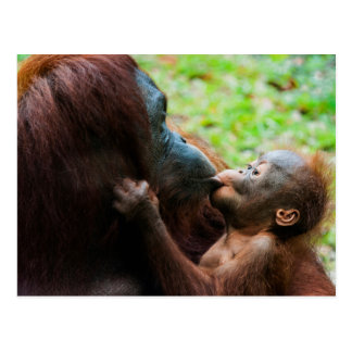 Orangutan mother and baby postcard
