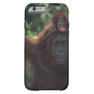 Orangutan Mother with Baby 5 Tough iPhone 6 Case