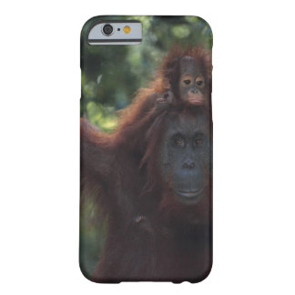 Orangutan Mother with Baby Barely There iPhone 6 Case