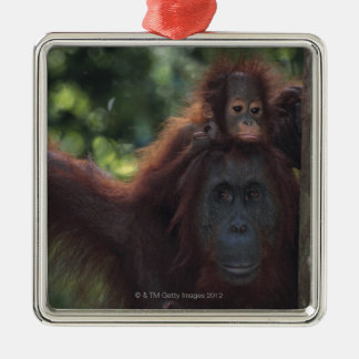 Orangutan Mother with Baby Christmas Ornament