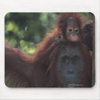 Orangutan Mother with Baby Mouse Mat