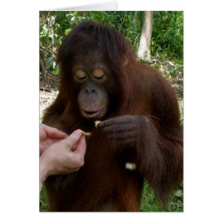 Orangutan Orphan Eats Peanuts in Jungle Card
