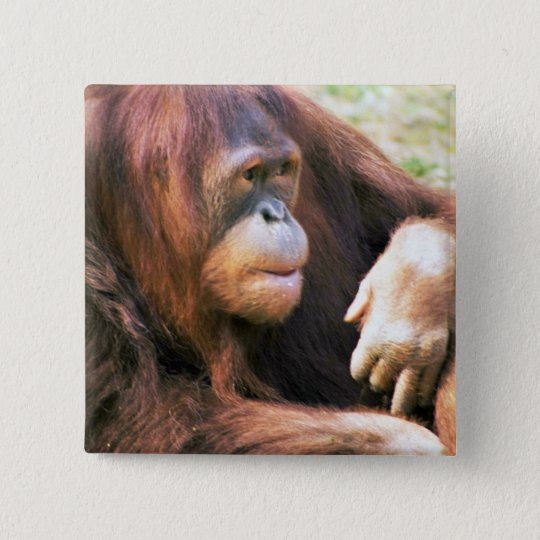 Orangutan Reclining 15 Cm Square Badge