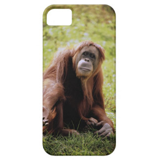 Orangutan sitting on grass and looking at camera case for the iPhone 5