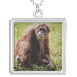 Orangutan sitting on grass and looking at camera silver plated necklace