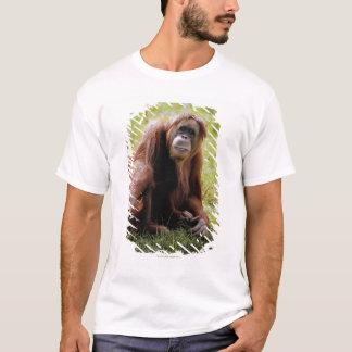 Orangutan sitting on grass and looking at camera T-Shirt