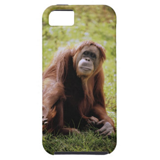 Orangutan sitting on grass and looking at camera tough iPhone 5 case