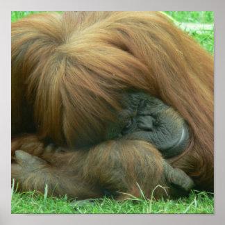 Orangutan Sleeping Print