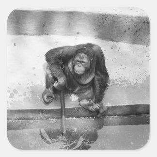 Orangutan Square Sticker