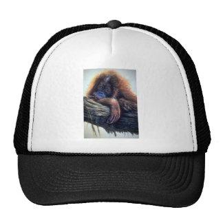 Orangutan study trucker hat