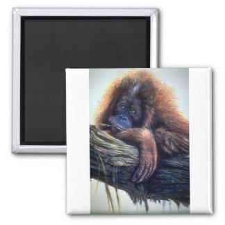 Orangutan study square magnet