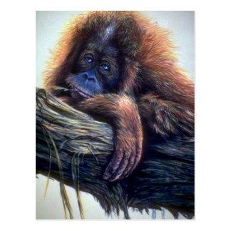 Orangutan study postcard
