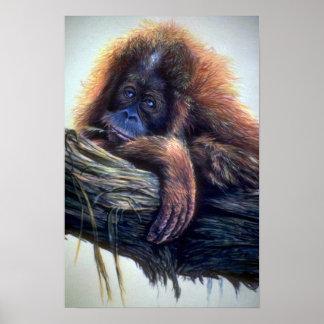 Orangutan study poster