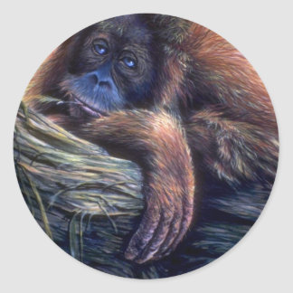 Orangutan study round sticker