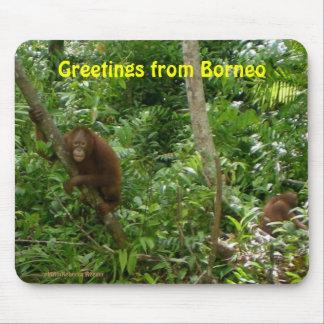 Orangutans in Borneo Mouse Pad