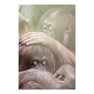 Orangutans Photo Enlargement