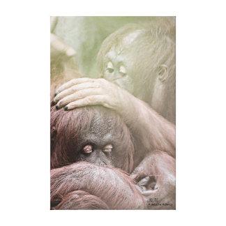 Orangutans Stretched Canvas Print