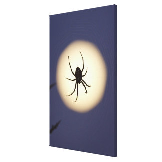 Orb spider on web with full moon, in south canvas print