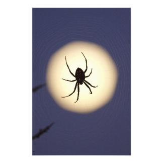 Orb spider on web with full moon, in south photo print
