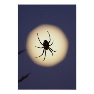 Orb spider on web with full moon, in south poster