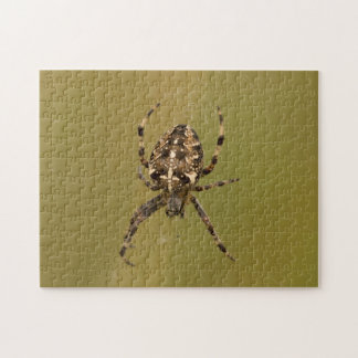 Orb-weaver Spider Jigsaw Puzzle