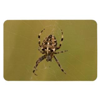 Orb-weaver Spider Magnet