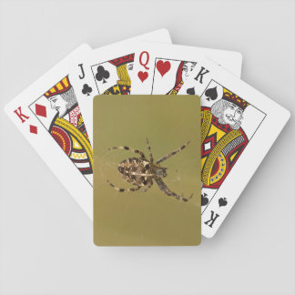 Orb-weaver Spider Playing Cards