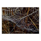 Orb Weaver Web in the Morning Dew