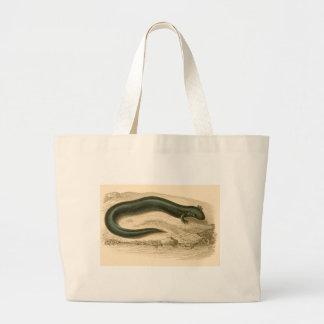 Orbigny - Salamander - Siren lacertina Bag