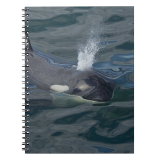 Orca blowing note books