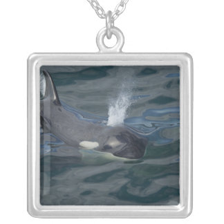 Orca blowing silver plated necklace