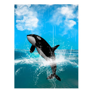 Orca jumping postcard