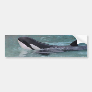 Orca...Killer Whale bumper sticker
