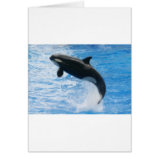 Orca Killer Whale Greeting Cards