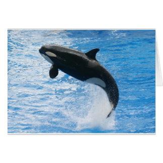 Orca Killer Whale Greeting Card