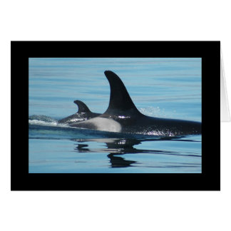 Orca/Killer Whale Mother's Day Card